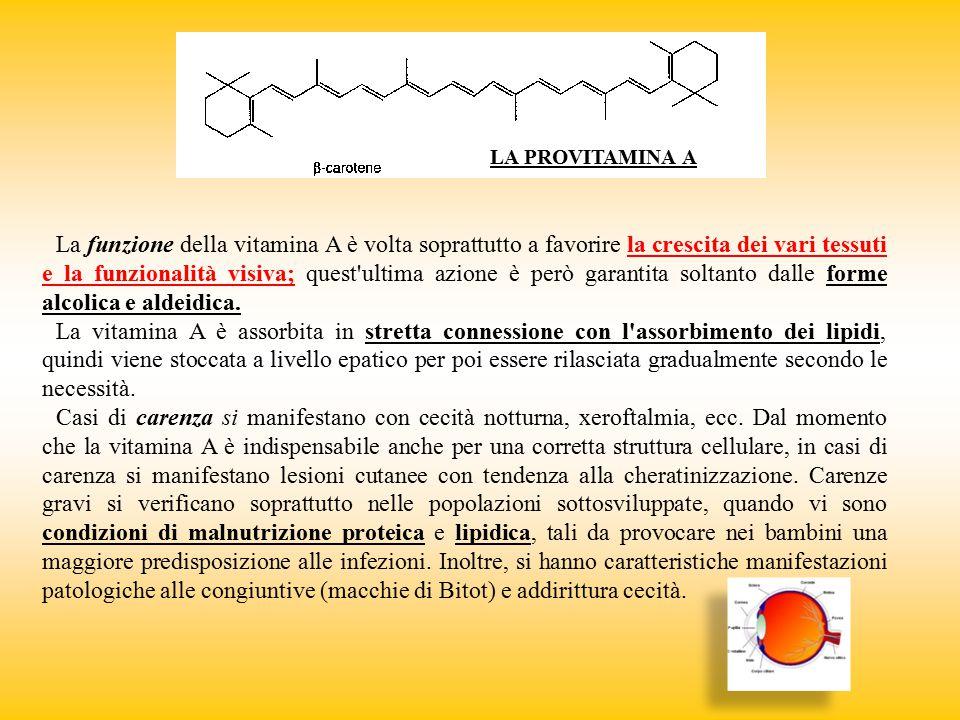 LA PROVITAMINA A La funzione della vitamina A è volta soprattutto a favorire la crescita dei vari tessuti e la funzionalità visiva; quest'ultima azion