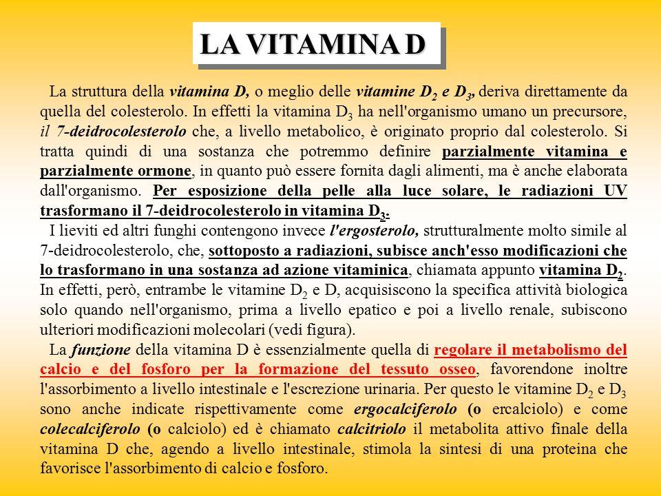 LA VITAMINA D La struttura della vitamina D, o meglio delle vitamine D 2 e D 3, deriva direttamente da quella del colesterolo. In effetti la vitamina