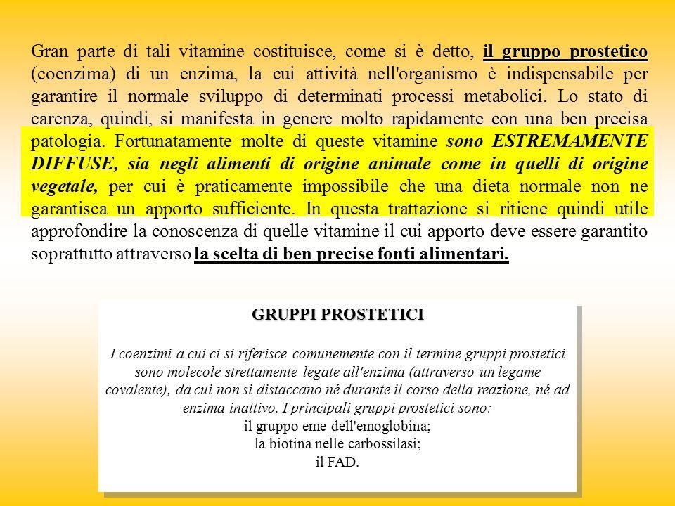 il gruppo prostetico la scelta di ben precise fonti alimentari. Gran parte di tali vitamine costituisce, come si è detto, il gruppo prostetico (coenzi
