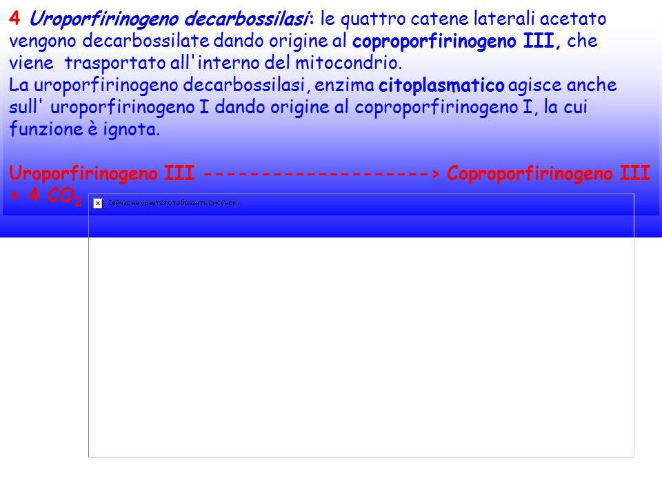 4 Uroporfirinogeno decarbossilasi: le quattro catene laterali acetato vengono decarbossilate dando origine al coproporfirinogeno III, che viene traspo