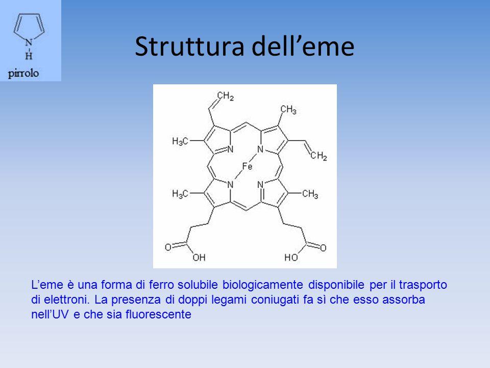 Difetti a livello di ciascuno degli 7 enzimi della sintesi dell'eme sono causa di una forma di porfiria + comune Aumento uroporfirogeno III (fotoattivo) Nei reni urine ambrate Assorbimento UV-> lesioni cutanee