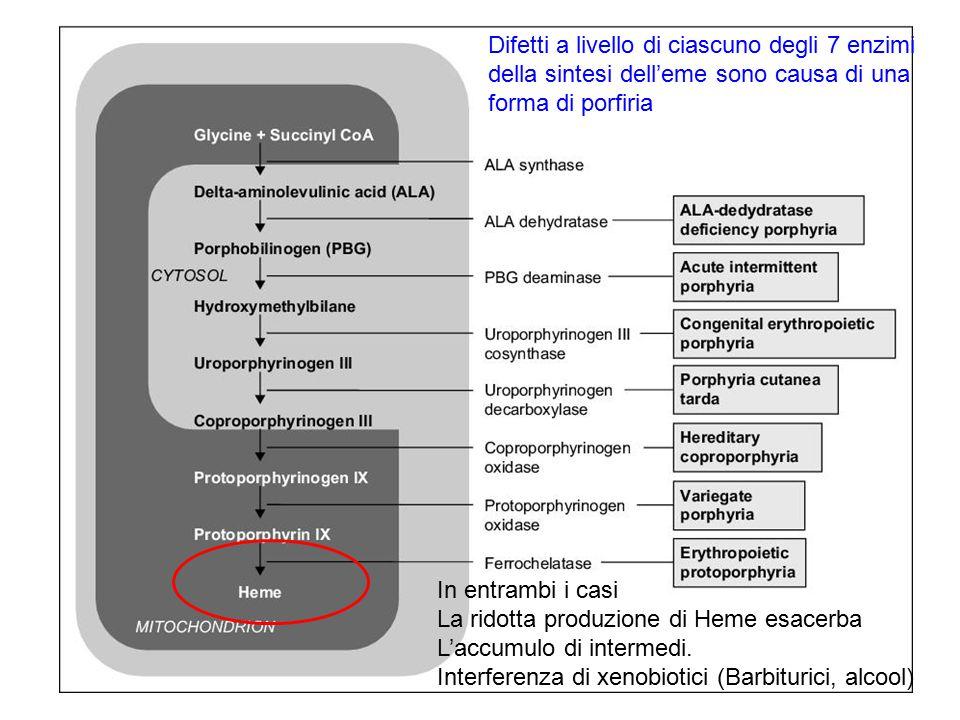 Difetti a livello di ciascuno degli 7 enzimi della sintesi dell'eme sono causa di una forma di porfiria In entrambi i casi La ridotta produzione di He