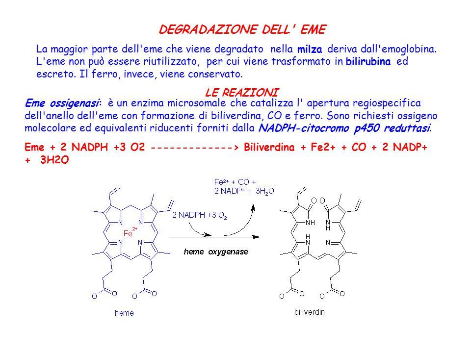 Eme ossigenasi: è un enzima microsomale che catalizza l' apertura regiospecifica dell'anello dell'eme con formazione di biliverdina, CO e ferro. Sono