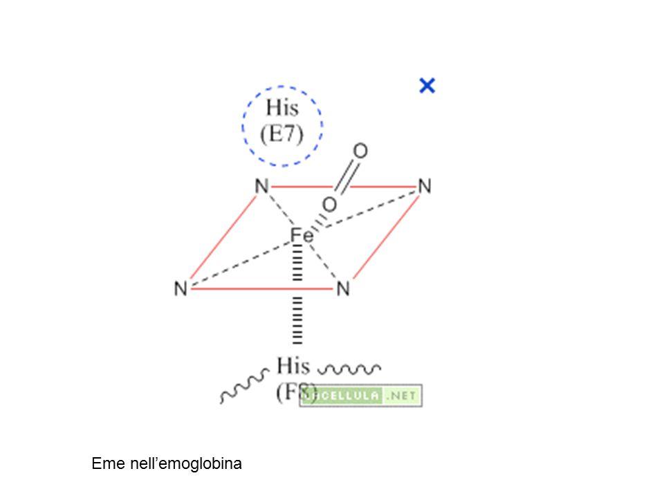 Tipo I inducibile dal substrato Tipo II costitutivo