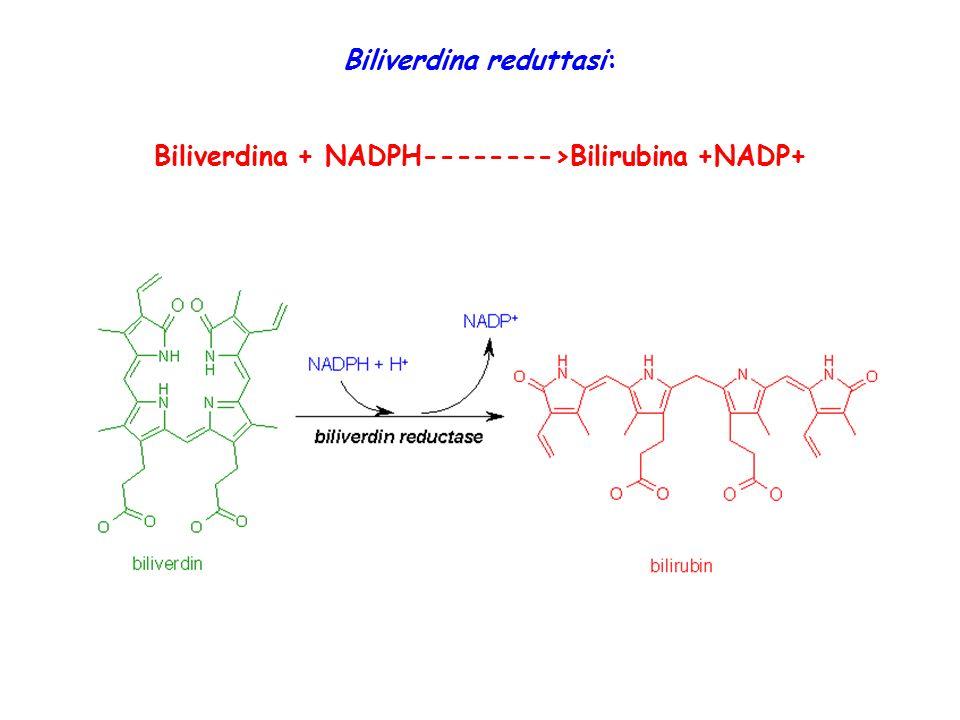 Biliverdina reduttasi: Biliverdina + NADPH-------->Bilirubina +NADP+