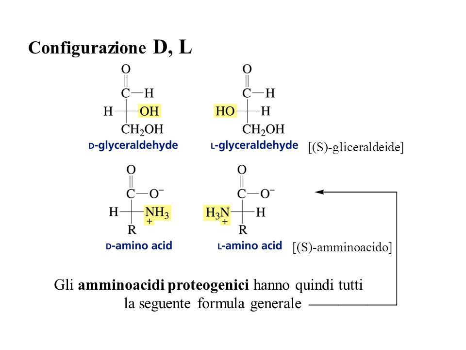 Configurazione D, L [(S)-gliceraldeide] [(S)-amminoacido] Gli amminoacidi proteogenici hanno quindi tutti la seguente formula generale