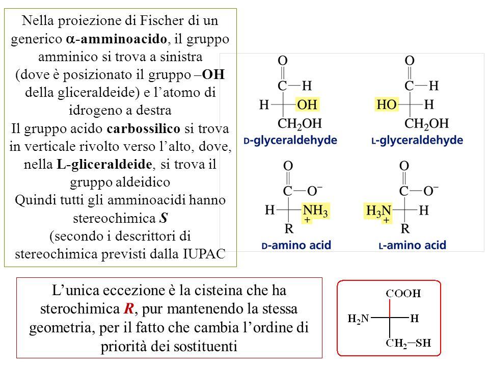 L'unica eccezione è la cisteina che ha sterochimica R, pur mantenendo la stessa geometria, per il fatto che cambia l'ordine di priorità dei sostituent