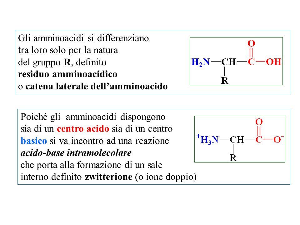 Gli amminoacidi si differenziano tra loro solo per la natura del gruppo R, definito residuo amminoacidico o catena laterale dell'amminoacido Poiché gl