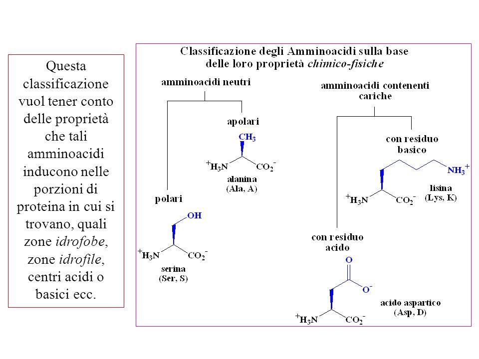 Questa classificazione vuol tener conto delle proprietà che tali amminoacidi inducono nelle porzioni di proteina in cui si trovano, quali zone idrofob