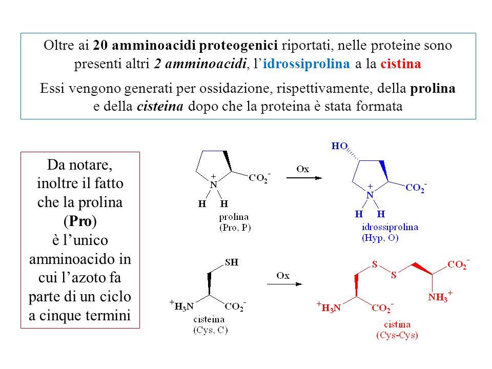 Oltre ai 20 amminoacidi proteogenici riportati, nelle proteine sono presenti altri 2 amminoacidi, l'idrossiprolina a la cistina Essi vengono generati