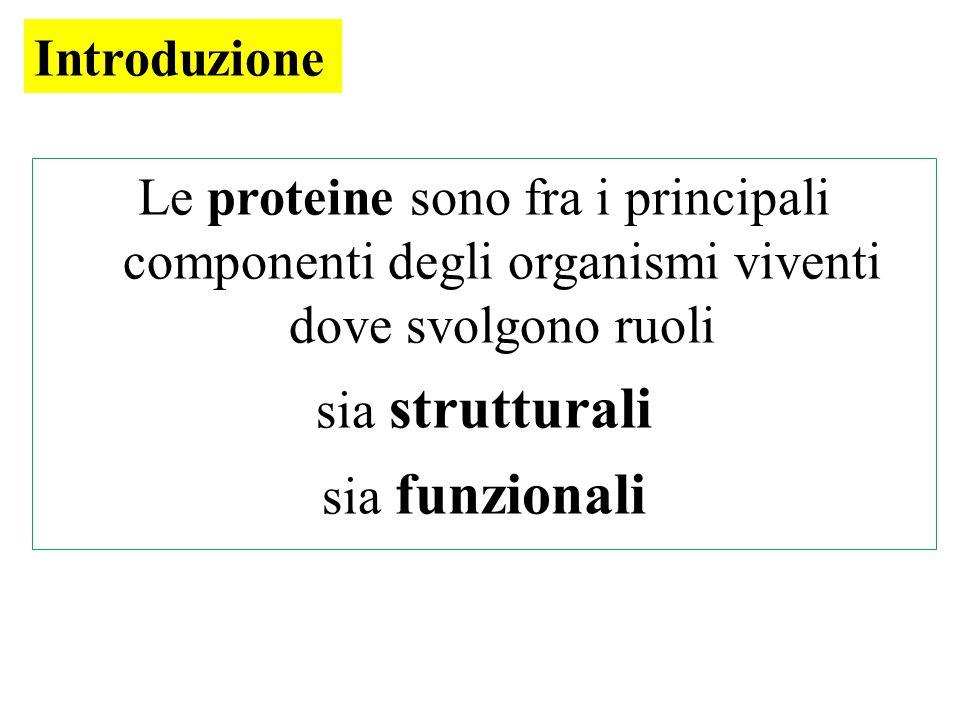 Le proteine sono fra i principali componenti degli organismi viventi dove svolgono ruoli sia strutturali sia funzionali Introduzione