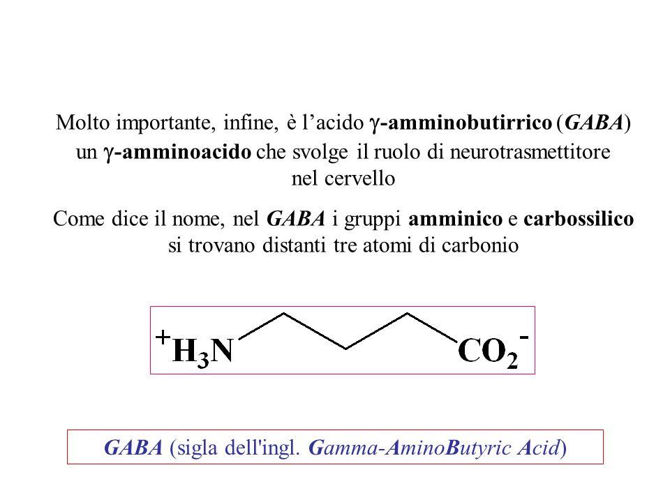 GABA (sigla dell'ingl. Gamma-AminoButyric Acid) Molto importante, infine, è l'acido  -amminobutirrico (GABA) un  -amminoacido che svolge il ruolo di