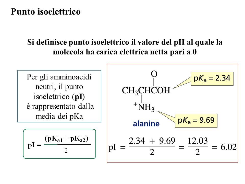 Si definisce punto isoelettrico il valore del pH al quale la molecola ha carica elettrica netta pari a 0 Punto isoelettrico Per gli amminoacidi neutri