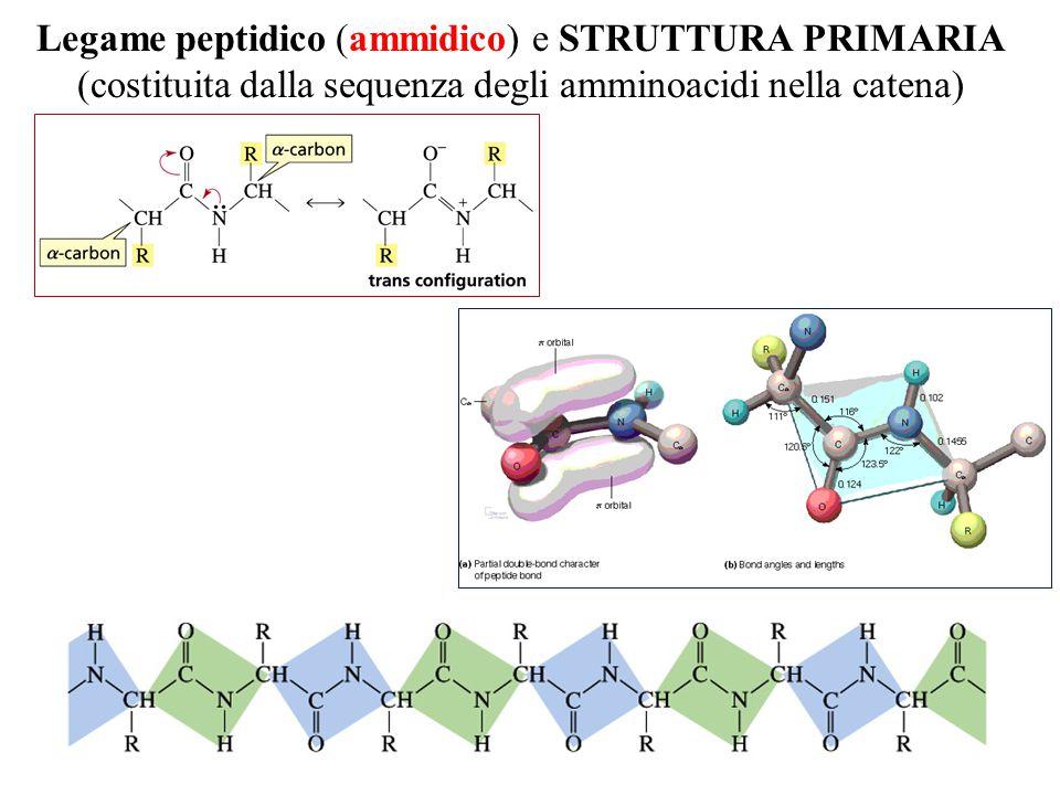 Legame peptidico (ammidico) e STRUTTURA PRIMARIA (costituita dalla sequenza degli amminoacidi nella catena)