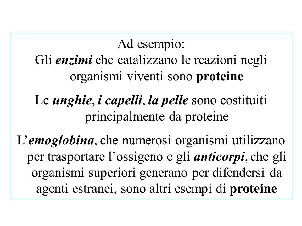 Ad esempio: Gli enzimi che catalizzano le reazioni negli organismi viventi sono proteine Le unghie, i capelli, la pelle sono costituiti principalmente