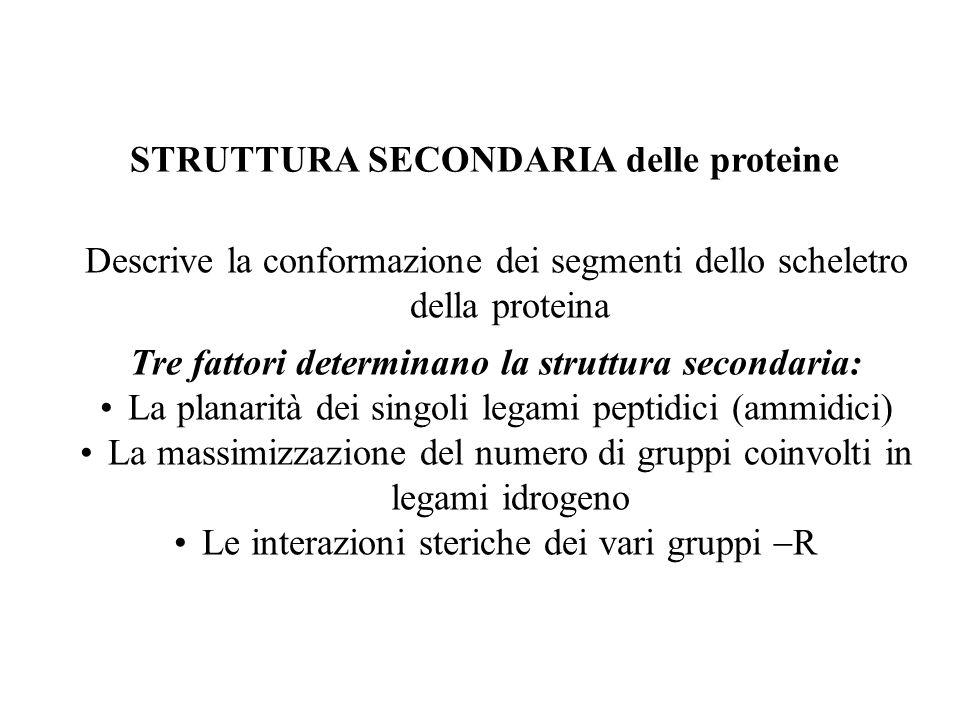 STRUTTURA SECONDARIA delle proteine Descrive la conformazione dei segmenti dello scheletro della proteina Tre fattori determinano la struttura seconda