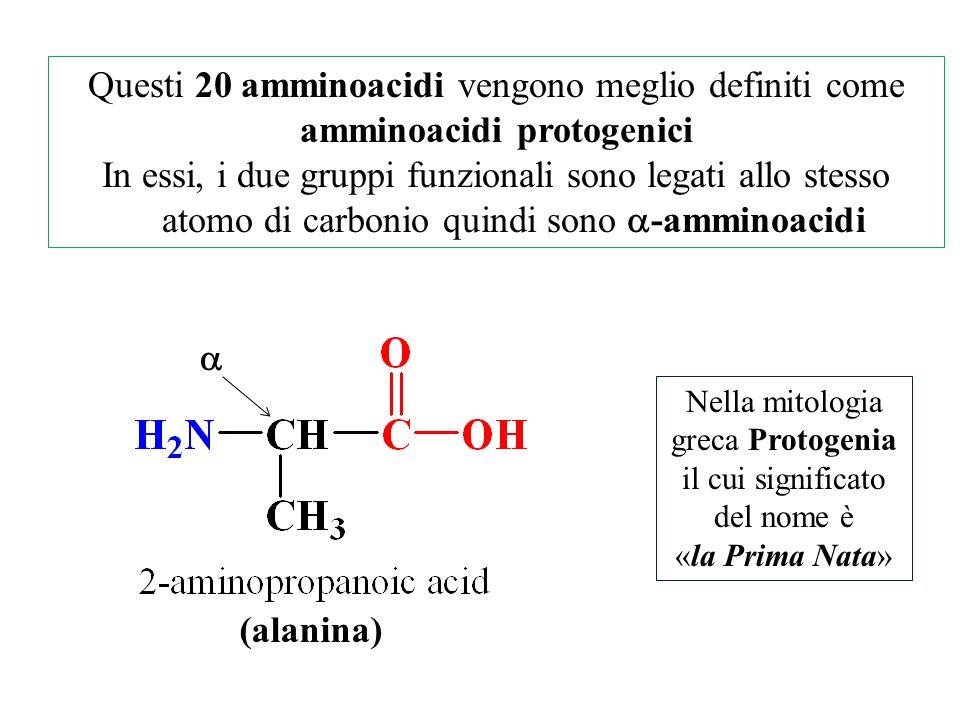 Questi 20 amminoacidi vengono meglio definiti come amminoacidi protogenici In essi, i due gruppi funzionali sono legati allo stesso atomo di carbonio