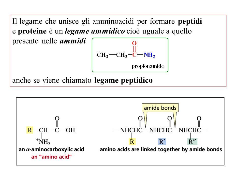 Il legame che unisce gli amminoacidi per formare peptidi e proteine è un legame ammidico cioè uguale a quello presente nelle ammidi anche se viene chi