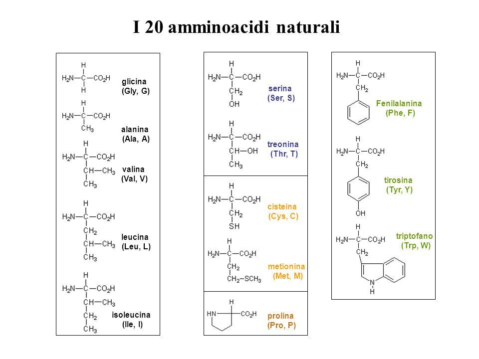 glicina (Gly, G) alanina (Ala, A) valina (Val, V) leucina (Leu, L) isoleucina (IIe, I) serina (Ser, S) treonina (Thr, T) cisteina (Cys, C) metionina (