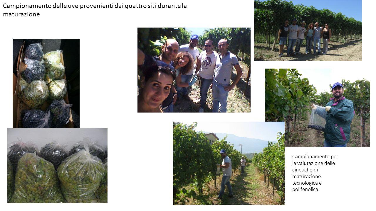 Campionamento delle uve provenienti dai quattro siti durante la maturazione Campionamento per la valutazione delle cinetiche di maturazione tecnologic