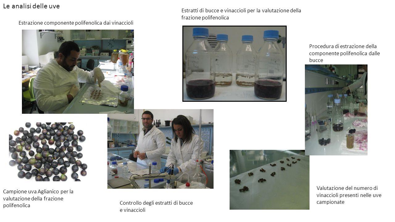 Le analisi delle uve Estrazione componente polifenolica dai vinaccioli Estratti di bucce e vinaccioli per la valutazione della frazione polifenolica P