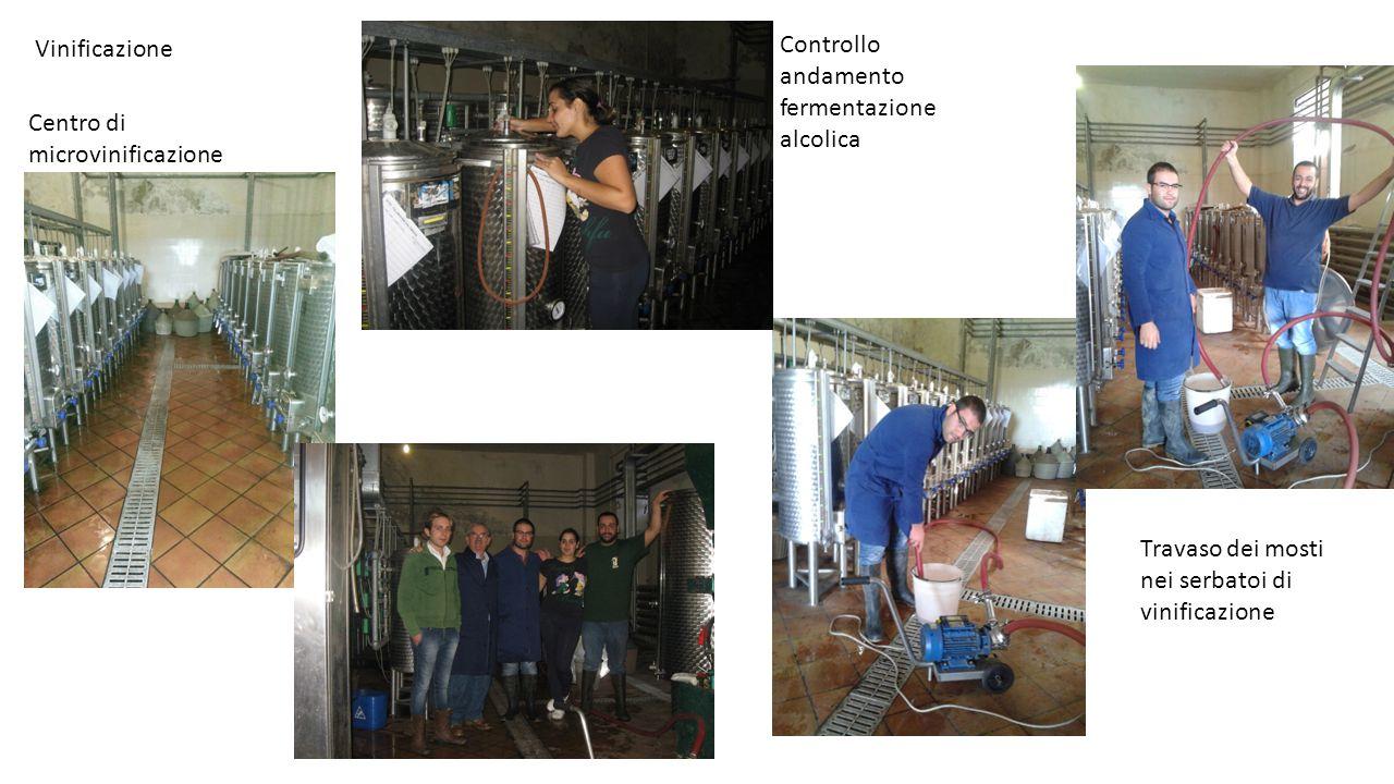 Vinificazione Centro di microvinificazione Travaso dei mosti nei serbatoi di vinificazione Controllo andamento fermentazione alcolica