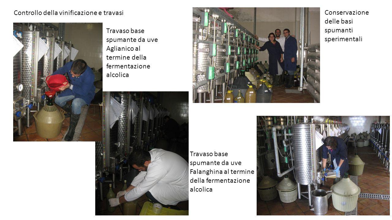 Controllo della vinificazione e travasi Conservazione delle basi spumanti sperimentali Travaso base spumante da uve Falanghina al termine della fermen