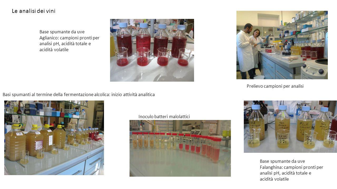 Le analisi dei vini Base spumante da uve Falanghina: campioni pronti per analisi pH, acidità totale e acidità volatile Prelievo campioni per analisi B