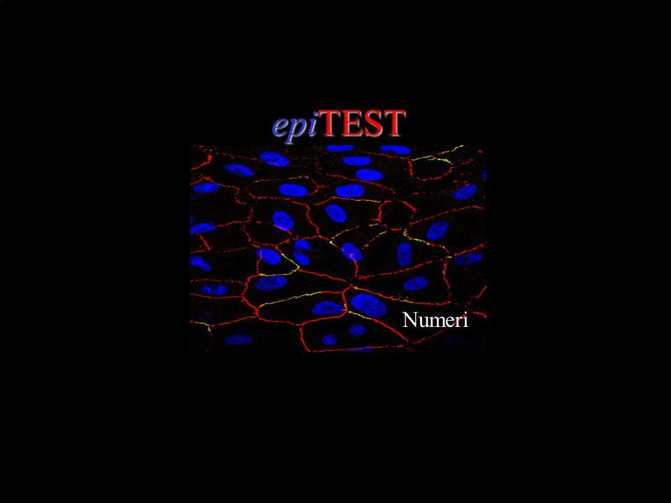 epiTEST Numeri