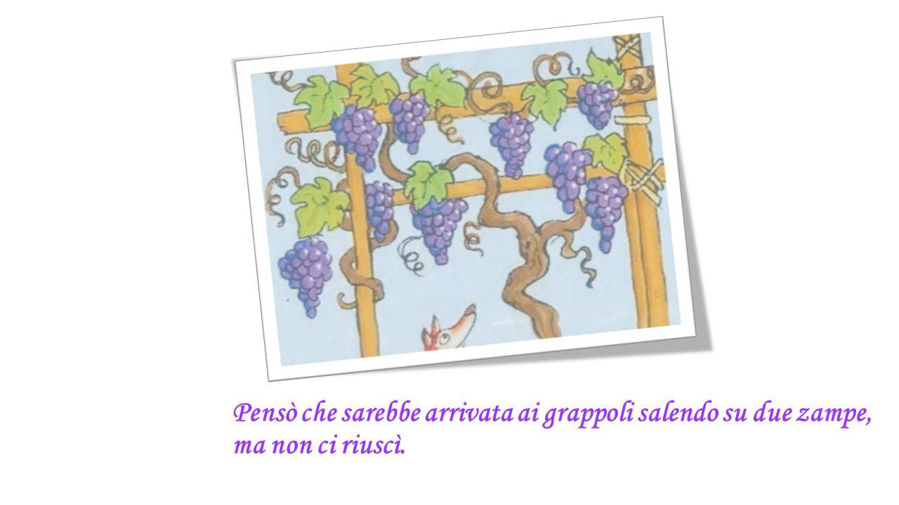 Allora provò saltando, ma non riuscì nemmeno in quel modo; allora chiese all'albero: «Albero, perché non mi dai uno dei tuoi grappoli.