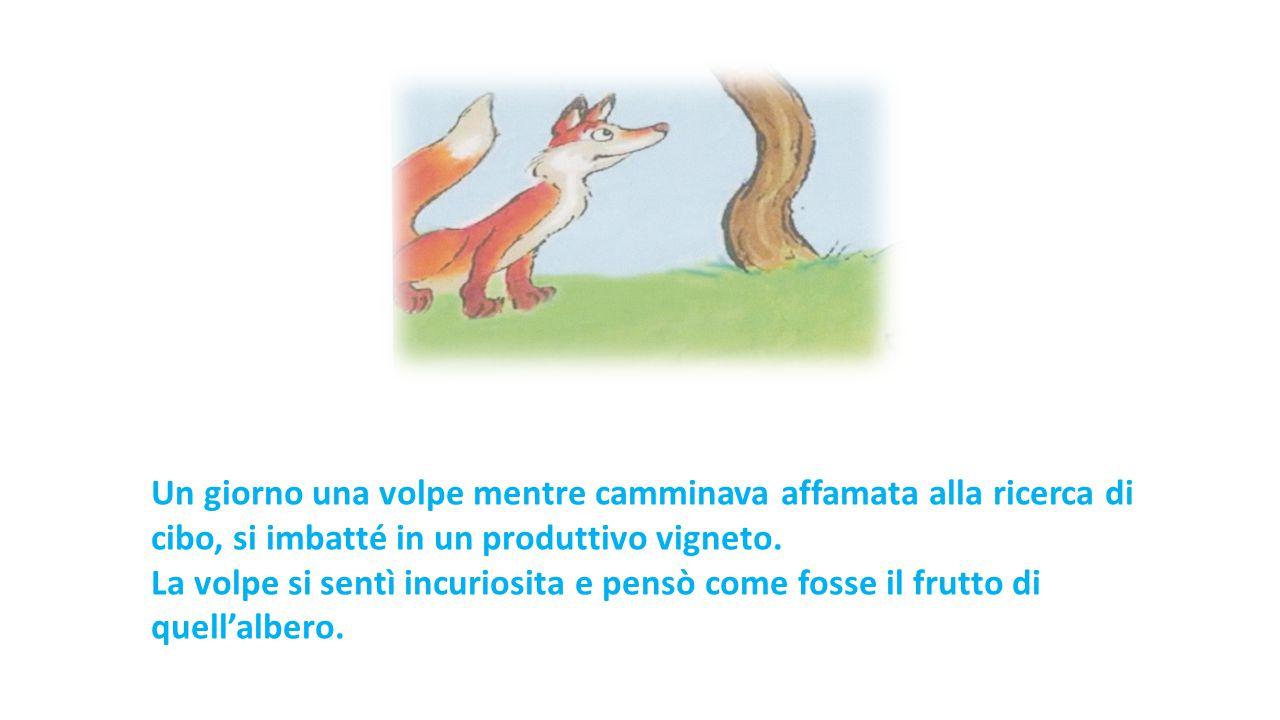 Un giorno una volpe mentre camminava affamata alla ricerca di cibo, si imbatté in un produttivo vigneto. La volpe si sentì incuriosita e pensò come fo
