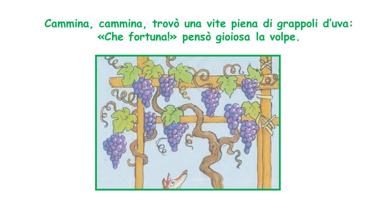 Cammina, cammina, trovò una vite piena di grappoli d'uva: «Che fortuna!» pensò gioiosa la volpe.