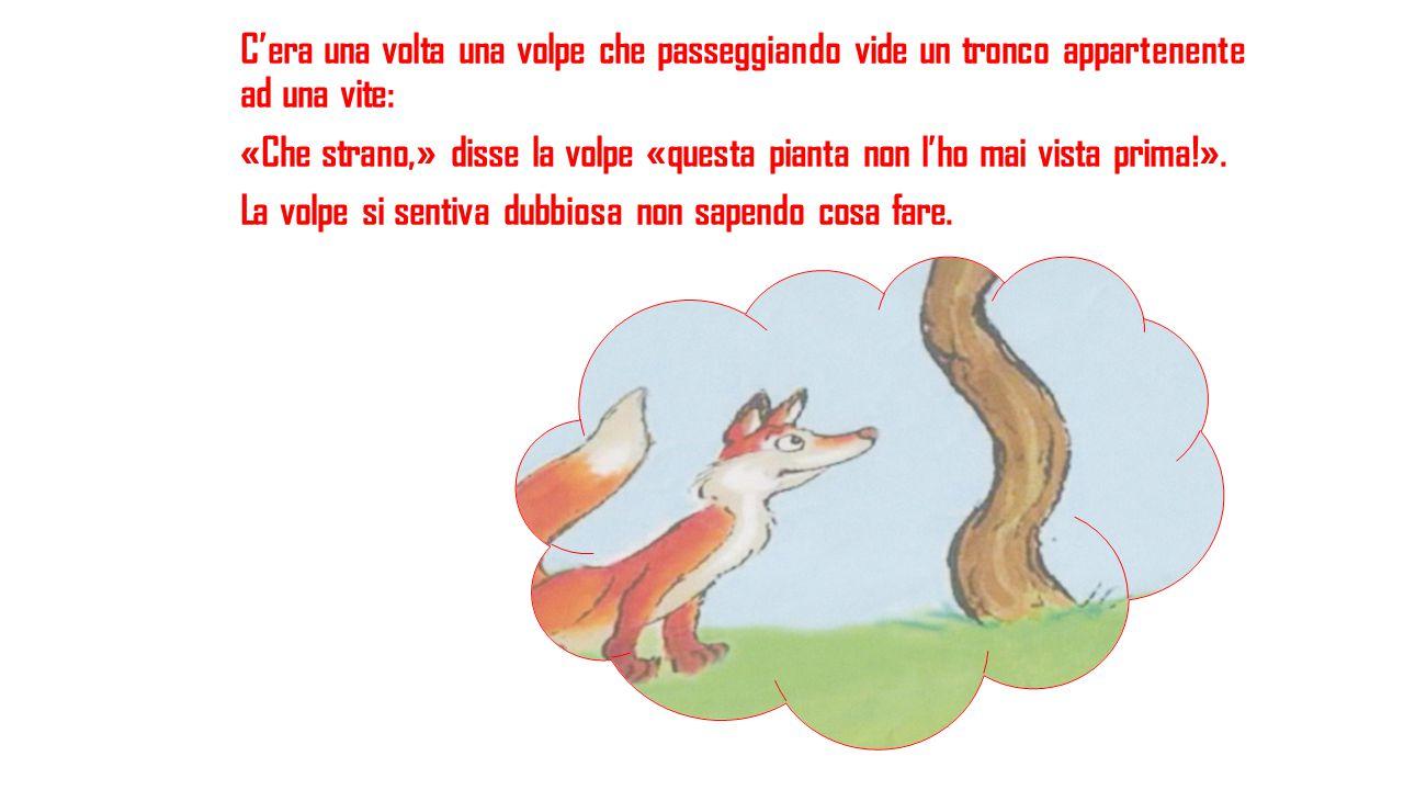 C'era una volta una volpe che passeggiando vide un tronco appartenente ad una vite: «Che strano,» disse la volpe «questa pianta non l'ho mai vista prima!».