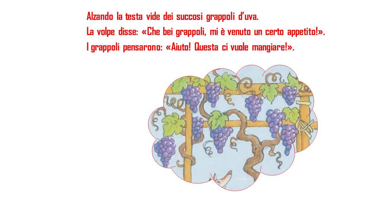 Alzando la testa vide dei succosi grappoli d'uva. La volpe disse: «Che bei grappoli, mi è venuto un certo appetito!». I grappoli pensarono: «Aiuto! Qu