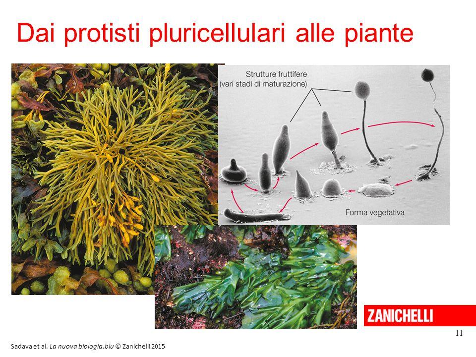 Dai protisti pluricellulari alle piante 11 Sadava et al. La nuova biologia.blu © Zanichelli 2015