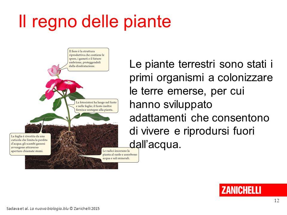 Il regno delle piante 12 Le piante terrestri sono stati i primi organismi a colonizzare le terre emerse, per cui hanno sviluppato adattamenti che cons
