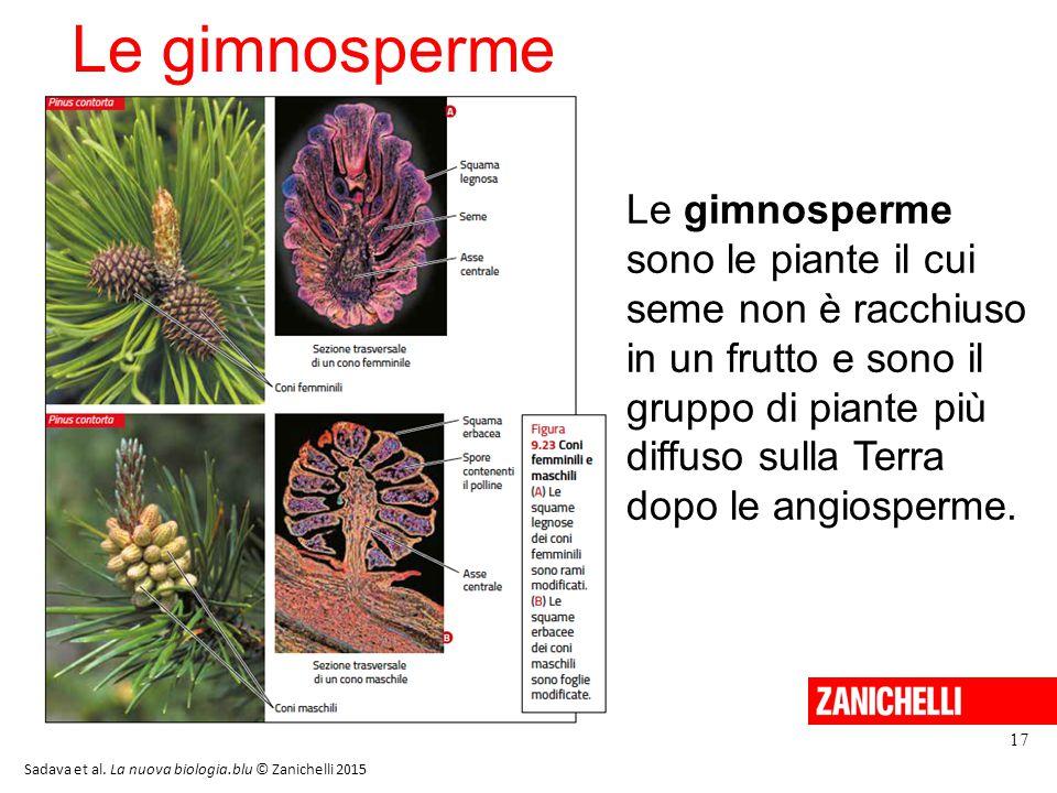 Le gimnosperme 17 Le gimnosperme sono le piante il cui seme non è racchiuso in un frutto e sono il gruppo di piante più diffuso sulla Terra dopo le an