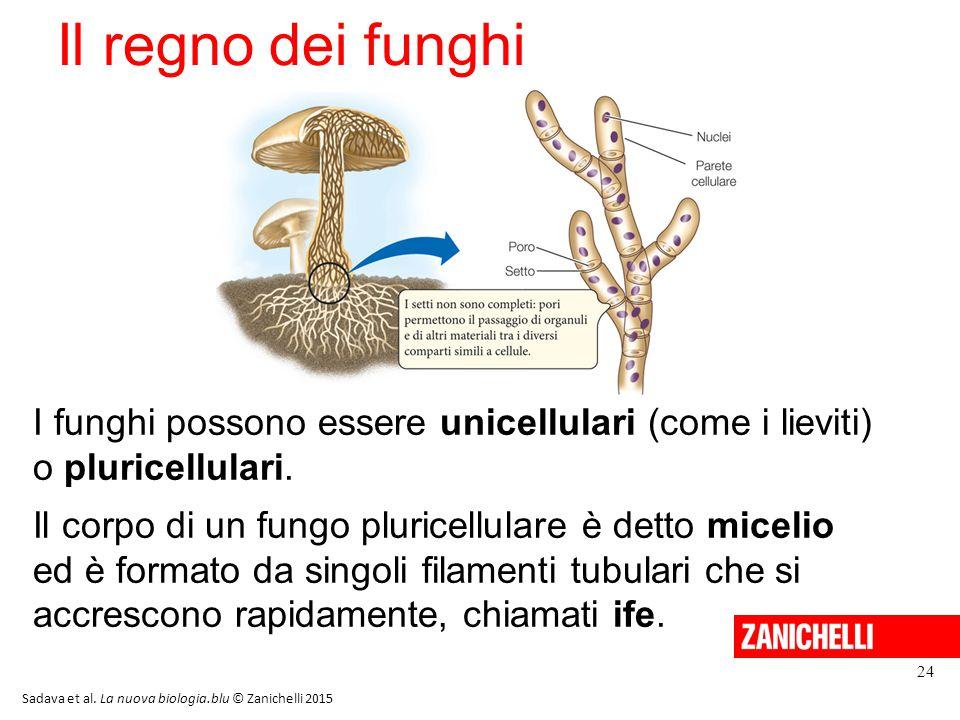Il regno dei funghi I funghi possono essere unicellulari (come i lieviti) o pluricellulari. Il corpo di un fungo pluricellulare è detto micelio ed è f