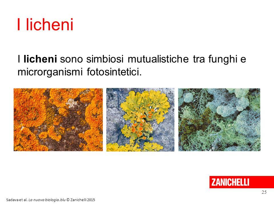I licheni 25 I licheni sono simbiosi mutualistiche tra funghi e microrganismi fotosintetici. Sadava et al. La nuova biologia.blu © Zanichelli 2015