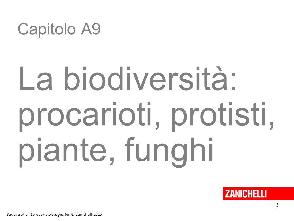 Capitolo A9 La biodiversità: procarioti, protisti, piante, funghi 3 Sadava et al. La nuova biologia.blu © Zanichelli 2015