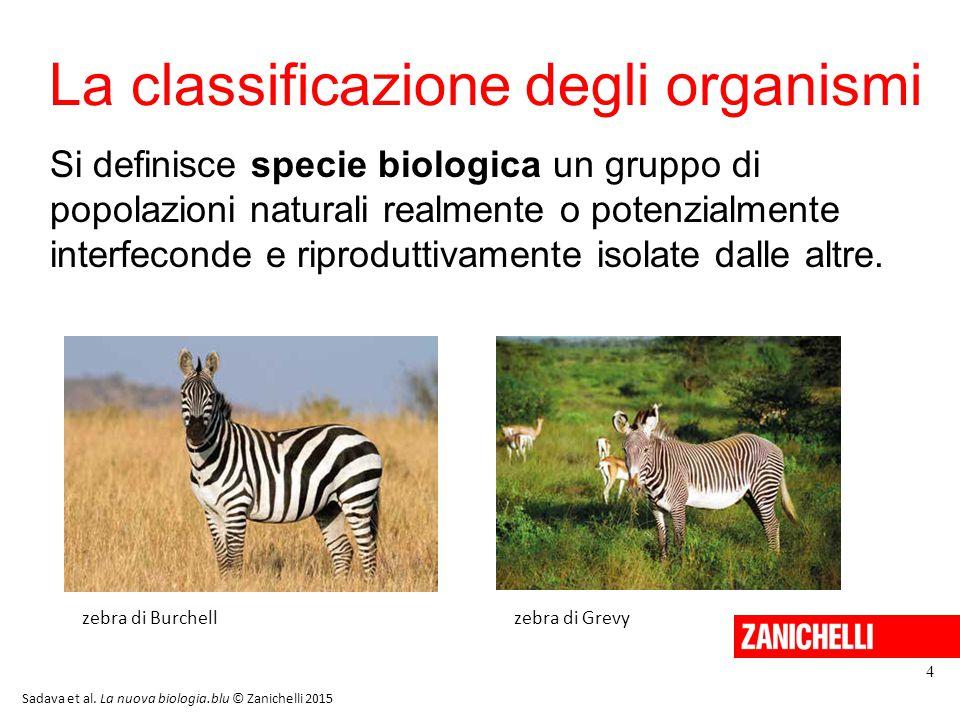 La classificazione degli organismi 4 Si definisce specie biologica un gruppo di popolazioni naturali realmente o potenzialmente interfeconde e riprodu