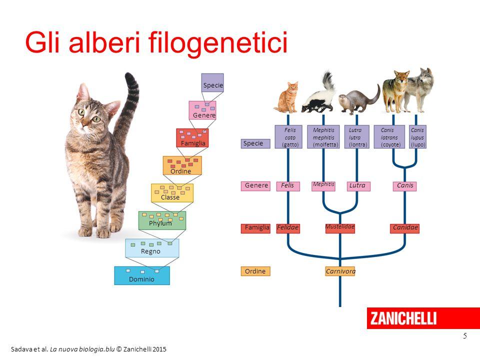 Gli alberi filogenetici 5 Sadava et al. La nuova biologia.blu © Zanichelli 2015 Dominio Regno Classe Phylum Ordine Famiglia Genere Specie Ordine Famig