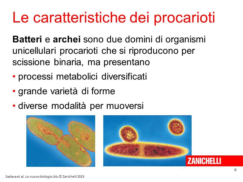 Le caratteristiche dei procarioti Batteri e archei sono due domini di organismi unicellulari procarioti che si riproducono per scissione binaria, ma p