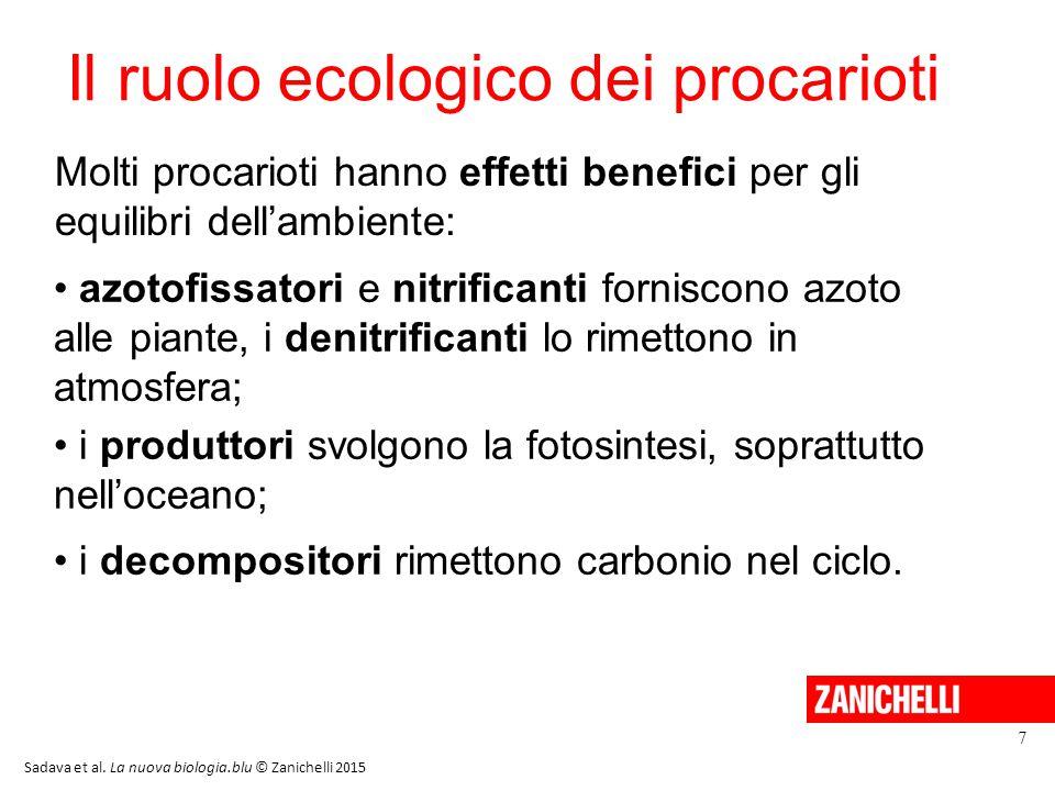 Il ruolo ecologico dei procarioti azotofissatori e nitrificanti forniscono azoto alle piante, i denitrificanti lo rimettono in atmosfera; i produttori