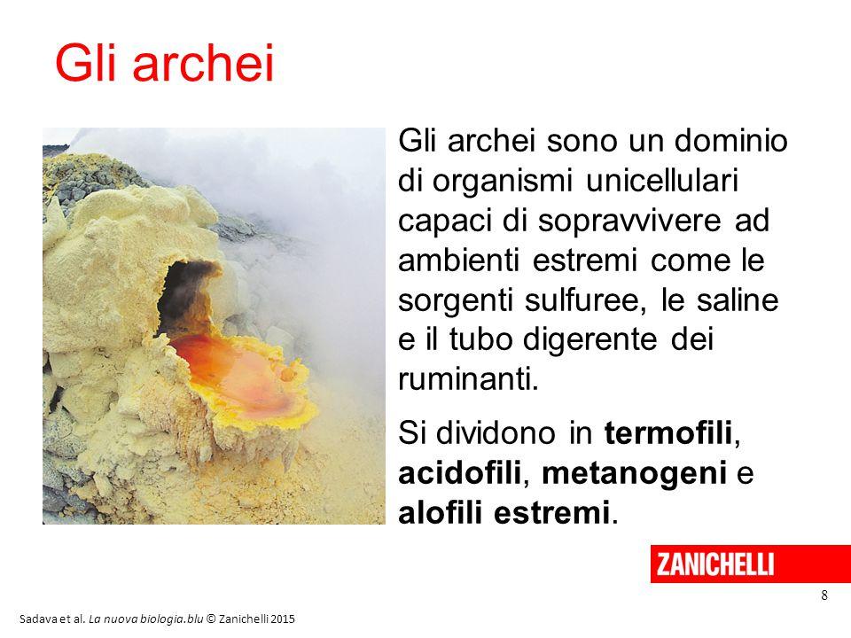 Gli archei Gli archei sono un dominio di organismi unicellulari capaci di sopravvivere ad ambienti estremi come le sorgenti sulfuree, le saline e il t