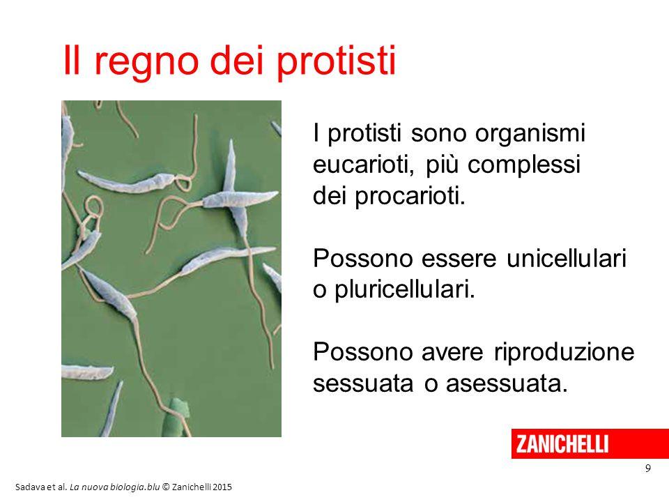 I protisti unicellulari 10 Sadava et al. La nuova biologia.blu © Zanichelli 2015