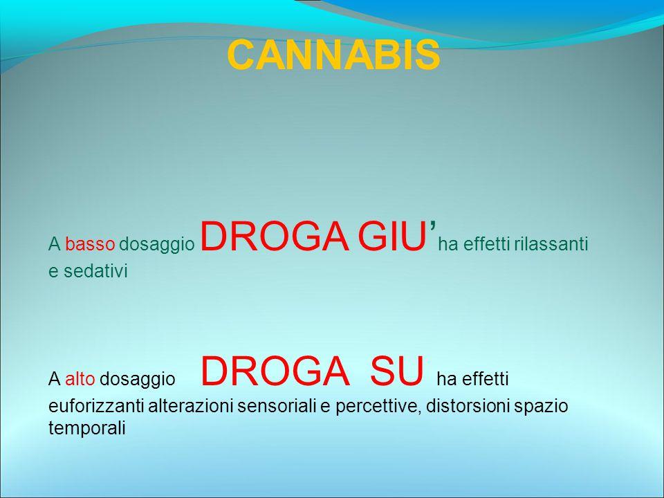 CANNABIS A basso dosaggio DROGA GIU' ha effetti rilassanti e sedativi A alto dosaggio DROGA SU ha effetti euforizzanti alterazioni sensoriali e percet
