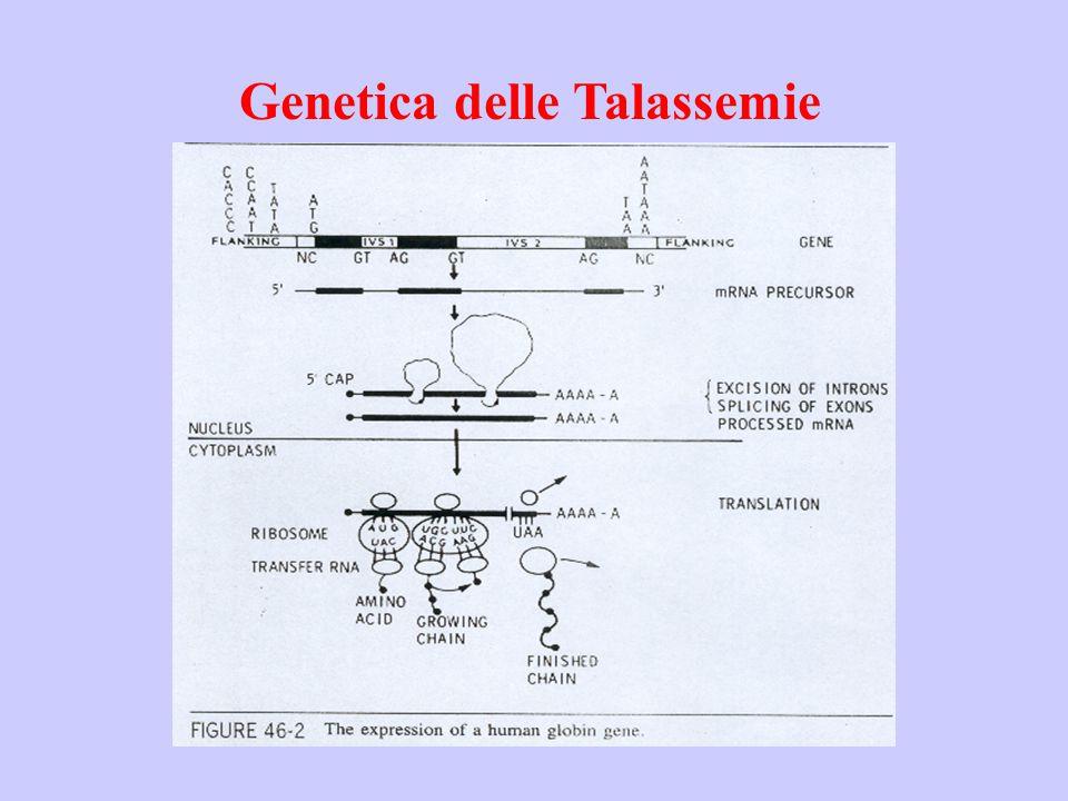 Genetica delle Talassemie