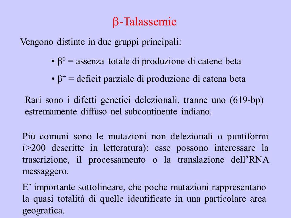  -Talassemie Vengono distinte in due gruppi principali:  0 = assenza totale di produzione di catene beta  + = deficit parziale di produzione di cat