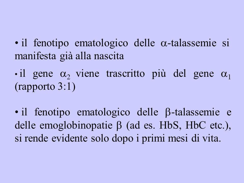 il fenotipo ematologico delle  -talassemie si manifesta già alla nascita il gene  2 viene trascritto più del gene  1 (rapporto 3:1) il fenotipo ema